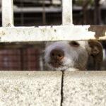 Încă un caz de cruzime împotriva animalelor. Câine legat cu o funie și târât de un copil aflat în portbagajul unei mașini