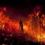 2020 a fost cel mai cald an în Europa, pe fondul incendiilor din nord și a unei ierni extraordinar de blândă