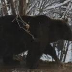 Locuitorii din Piatra Neamț au decis: Grădina zoologică unde a fost captivă ursoaica Ina se închide. Ce se va întâmpla cu animalele